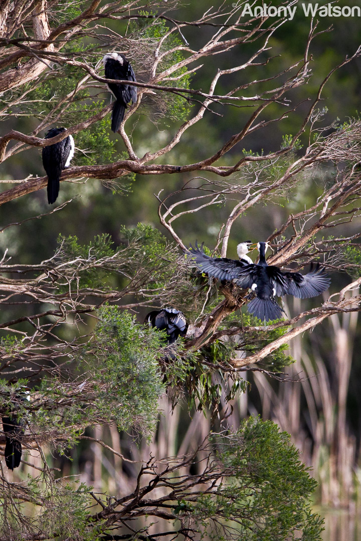 Birding-7593
