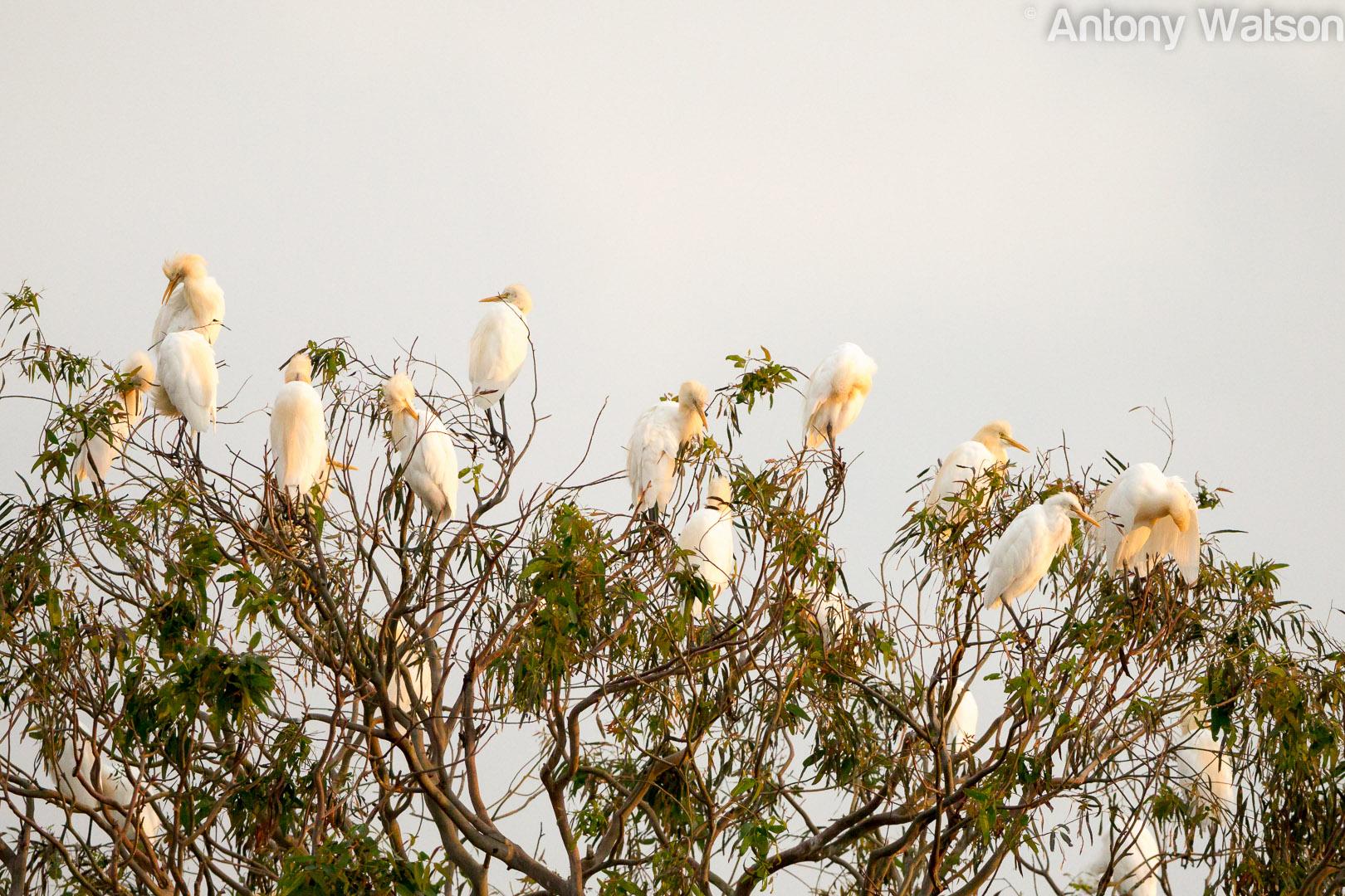 Birding-7985